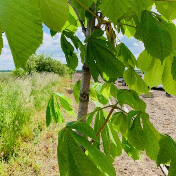 Spoločné sadenie stromov