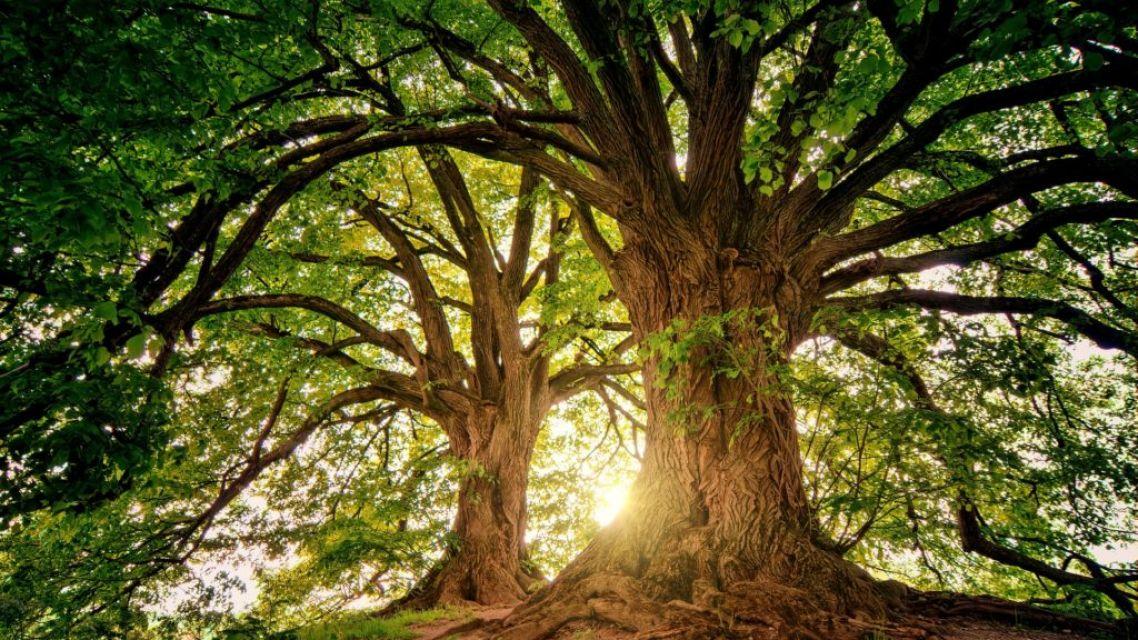Hľadáme posily, ktoré nám pomôžu s Vysadzovacím manuálom zelene