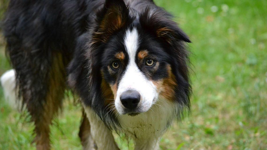 Upozorňujeme psíčkarov na zvýšenú mieru kontroly dodržiavania čistoty verejného priestoru