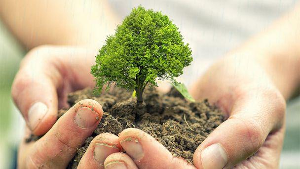 Pozývame na komunitné sadenie stromov